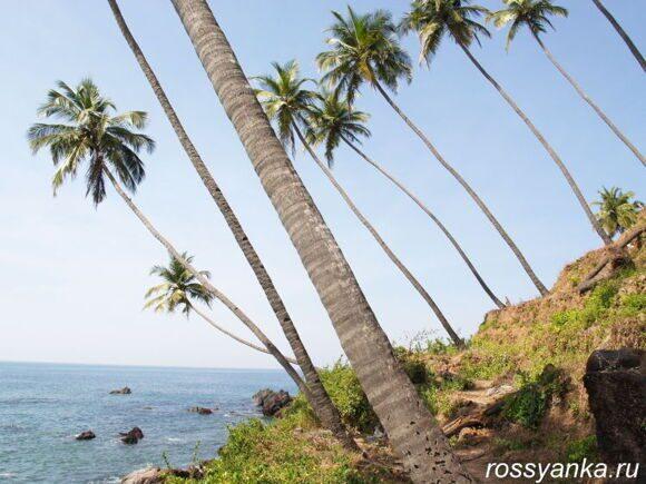 Пляж Кола в Гоа 8